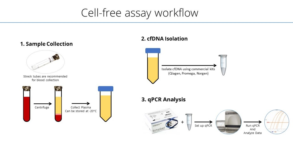 Cell-free-assay-workflow